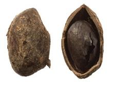 roman catterick - pistachio